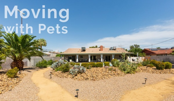 Tips on Moving with Pets: Explained by One of the Best Real Estate Companies in Las Vegas | Craig Tann huntington & ellis, A Real Estate Agency